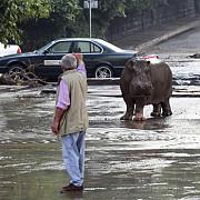 mai multe animale au evadat de la gradina zoologica in urma inundatiilor din capitala georgiei