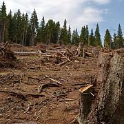 guvernul vrea sa interzica exportul de lemn de perioada limitata