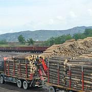 exporturile de busteni cherestea si lemn de foc vor fi suspendate pana la 31 august