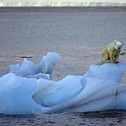 previziuni sumbre cresterea temperaturii globale va provoca peste 30000 de decese pe an