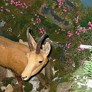 spectacolul vietii la muzeul judetean de stiintele naturii prahova