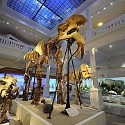 muzeul grigore antipa cel mai vizitat din bucuresti