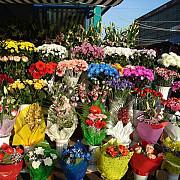 evaziune fiscala din flori prejudiciu peste 1 milion de euro