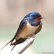 studiu ingrijorator pasarile isi modifica aripile din cauza incalzirii globale