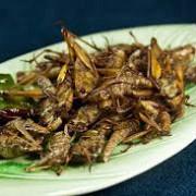 mancarea viitorului insectele mai hranitoare si mai sanatoase decat carnea de pui porc sau vita