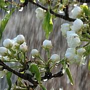 vremea in weekend vin ploile de primavara