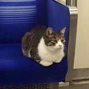 o pisica se plimba de trei ani cu metroul din tokyo