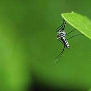 incalzirea globala ar putea aduce virusul zika in europa in aceasta vara