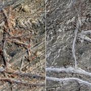 un desen rupestru vechi de 5000 de ani a fost vandalizat distrugerile sunt ireparabile