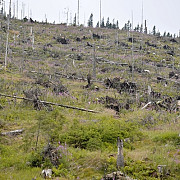 hotii de lemn vor fi urmariti prin satelit
