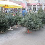 peste 7600 de pomi de craciun confiscati si amenzi de peste 15 milioane de lei in urma unor controale