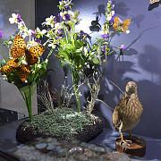 arii protejate la muzeul de stiintele naturii prahova