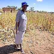 stare de dezastru in zimbabwe din cauza secetei