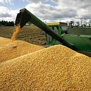 afacerile cu cereale luate la cernut perchezitii la regele granelor