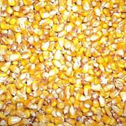 frauda uriasa in afaceri cu cereale peste 21 de milioane de euro