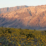 arida vale a mortii din california s-a transformat intr-un covor de flori