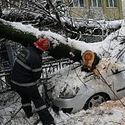 prahova mai multi copaci au cazut peste masini cablurile electrice de la liceul 1 mai au fost rupte