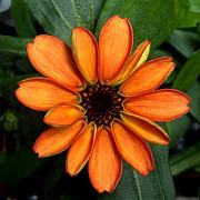 a inflorit o carciumareasa prima floare crescuta in spatiul cosmic