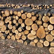 guvernul modifica regulamentul de valorificare a masei lemnoase