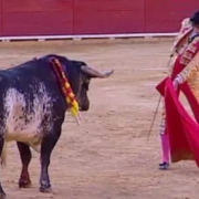 video socant un toreador a fost ucis de un taur scena a fost transmisa in direct de televiziunile spaniole
