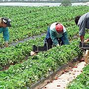 guvernul ar putea introduce tichetele de munca pentru zilieri