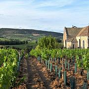 regiunea viticola bourgogne renumita pentru vinurile rosii