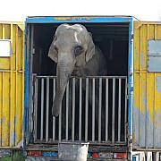 vier pfoten un elefant si un hipopotam ai unui circ tinuti in parcarea unui hipermarket  in stare deplorabila