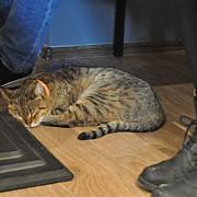 prima cafenea cu pisici din cluj un real succes chiar de la inaugurare