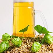 elemente din bere ar putea contribui la tratarea cancerului si a altor boli