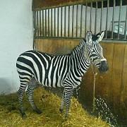locatar nou la zoo ploiesti