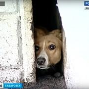 un caine care a ramas blocat 3 ani intre ziduri a fost salvat
