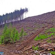 tairea ilegala a padurilor este problema nationala peste 100 de sanctiuni noi cele vechi au fost dublate