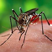 numarul infectiilor cu virusul west nile aproape dublu in acest sezon fata de 2015