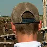doi ciobani sunt anchetati pentru ca au sechestrat un minor si l-au obligat sa munceasca la stana