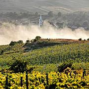 romania are cei mai multi proprietari de vie din ue desi se afla pe locul 5 dupa suprafata cultivata