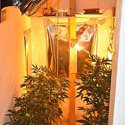 calarasi femeie retinuta dupa ce in locuinta sa au fost gasite aproape 4 kilograme de fragmente vegetale si o cultura de cannabis