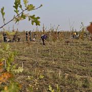 plantam viitor verde - o noua etapa la ploiesti