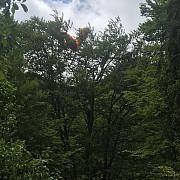 turist francez ramas agatat cu parapanta in copaci in apropiere de sinaia
