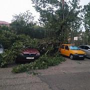 copaci doborati de furtuna acoperisuri smulse de vantul puternic si gospodarii inundate bilantul vijeliilor in sase judete