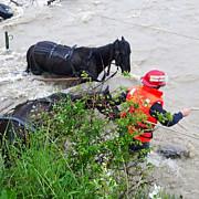 doi carutasi salvati din mijlocul apelor involburate la banesti foto si video