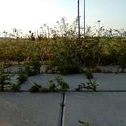 parcul municipal vest - raiul ambroziei foto