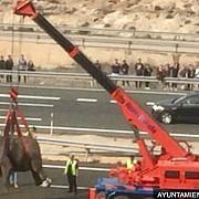 elefanti pe o autostrada in murcia in urma unui accident rutier in sud-estul spaniei