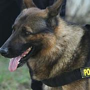 politia prahova vinde prin licitatie publica cinci caini de serviciu
