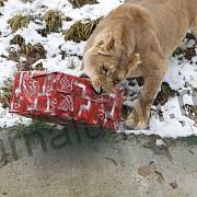 craciunul animalelor din nou la gradina zoologica bucov