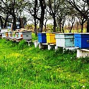 doi oameni au murit iar un al treilea este in soc anafilactic dupa ce au fost intepati de albine