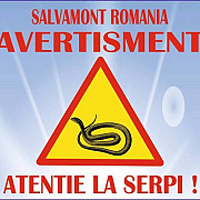 salvamont intalnirile cu serpii pe munte devin din ce in ce mai dese in cazul unei muscaturi consumul de alcool miscarile bruste sau aplicarea ghetii pe rana sunt strict interzise