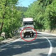 cum a oprit o ursoaica traficul in baile tusnad soferii asteapta rabdatori ca mama sa-si treaca puiul peste strada video
