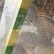 socant iepuras mort in vitrina unui pet shop din ploiesti foto