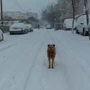 primarul dobre a avut dreptatein ploiesti nu ninge foto
