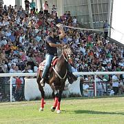 hipodromul ploiesti armasarul navalnic s-a impus in premiul cailor de 4 ani